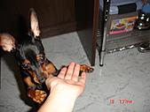 狗寶貝:DSC01166.JPG