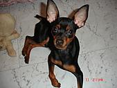 狗寶貝:DSC01175.JPG