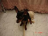 狗寶貝:DSC01180.JPG