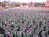 中社花園:2011-01-30 11.16.06.jpg
