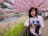 2011 河津櫻:DSC04256.jpg