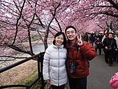 2011 河津櫻:DSC04387.jpg