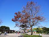 2010 六福村:其實今天Mike想去賞楓的,剛好六福村門前有一棵。