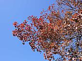 2010 六福村:有紅喔~~
