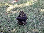 2010 六福村:其實六福村的動物園比較好看,這是紅毛猩猩小朋友。