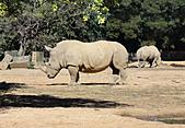 2010 六福村:犀牛