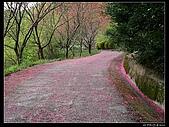 2009-0221 南庄碧絡角+神仙谷:IMGP9877.jpg
