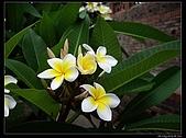 2009-0528 台南:IMGP2823.jpg