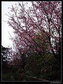 2009-0221 南庄碧絡角+神仙谷:IMGP9900.jpg