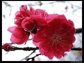 2009-0221 南庄碧絡角+神仙谷:IMGP9905.jpg