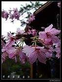 2009-0221 南庄碧絡角+神仙谷:IMGP9853.jpg
