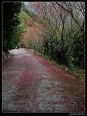 2009-0221 南庄碧絡角+神仙谷:IMGP9915.jpg