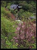 2009-0221 南庄碧絡角+神仙谷:IMGP9923.jpg