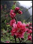 2009-0221 南庄碧絡角+神仙谷:IMGP9858.jpg