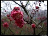 2009-0221 南庄碧絡角+神仙谷:IMGP9863.jpg