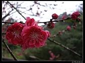 2009-0221 南庄碧絡角+神仙谷:IMGP9865.jpg