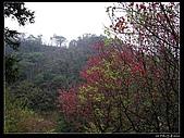 2009-0221 南庄碧絡角+神仙谷:IMGP9928.jpg