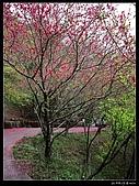 2009-0221 南庄碧絡角+神仙谷:IMGP9893.jpg