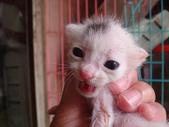 奶貓六隻:DSC03621.JPG