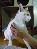 【已送養】小新:P1050956.JPG