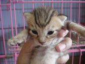 奶貓六隻:1 (1).JPG