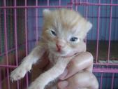 奶貓六隻:1 (2).JPG