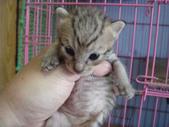 奶貓六隻:1 (3).JPG