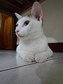 小兔 :P1090590.JPG