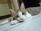 【已送養】古椎 :P1090597.JPG