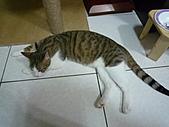 【已送養】古椎 :P1090599.JPG
