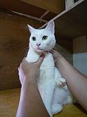 【已送養】白熊:P1060042.JPG