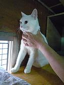 【已送養】白熊:P1060062.JPG