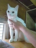 【已送養】白熊:P1060066.JPG