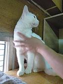 【已送養】白熊:P1060068.JPG