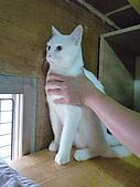 【已送養】白熊:P1060069.JPG