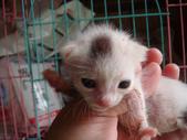 奶貓六隻:DSC03615.JPG