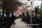 福爾摩莎:新竹市~東南街239巷汀甫圳賞櫻 (49).jpg