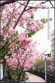 福爾摩莎:新竹市~東南街239巷汀甫圳賞櫻 (21).jpg