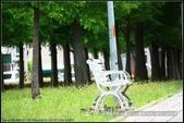 隨心所遇 :綠意盎然的玉山公園落羽松 (29).jpg