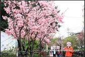 福爾摩莎:新竹市~東南街239巷汀甫圳賞櫻 (30).jpg