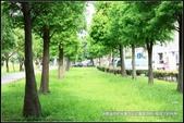 隨心所遇 :綠意盎然的玉山公園落羽松 (26).jpg