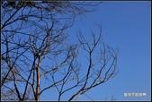 舊地重遊:樹隨拍_02.jpg