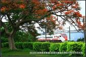 福爾摩莎:2014年苗栗縣造橋鎮~鳳凰花開的路口_05.jpg