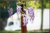 隨心所遇 :2017年中壢區-元生公園紫藤花 (21).jpg