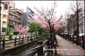 福爾摩莎:新竹市~東南街239巷汀甫圳賞櫻 (12).jpg