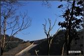 舊地重遊:樹隨拍_03.jpg