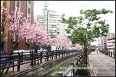 福爾摩莎:新竹市~東南街239巷汀甫圳賞櫻 (45).jpg