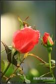 語眾不同:玫瑰花.JPG
