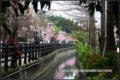 福爾摩莎:新竹市~東南街239巷汀甫圳賞櫻 (46).jpg