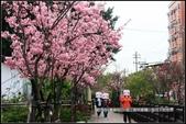 福爾摩莎:新竹市~東南街239巷汀甫圳賞櫻 (29).jpg